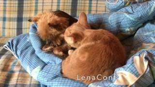 LC239: Женский клуб.Дача. В мире животных. Кто сказал, что живут как кошка с собакой?!