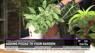 Tropical Foliage Plants that Add Pizzazz to Your Garden