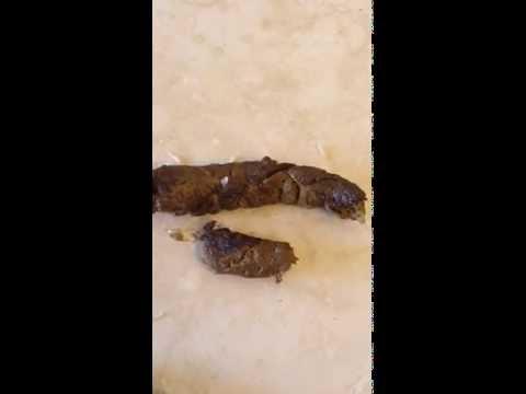 Tapeworms Crawling In Dog Poop Doovi