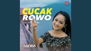 Cucak Rowo