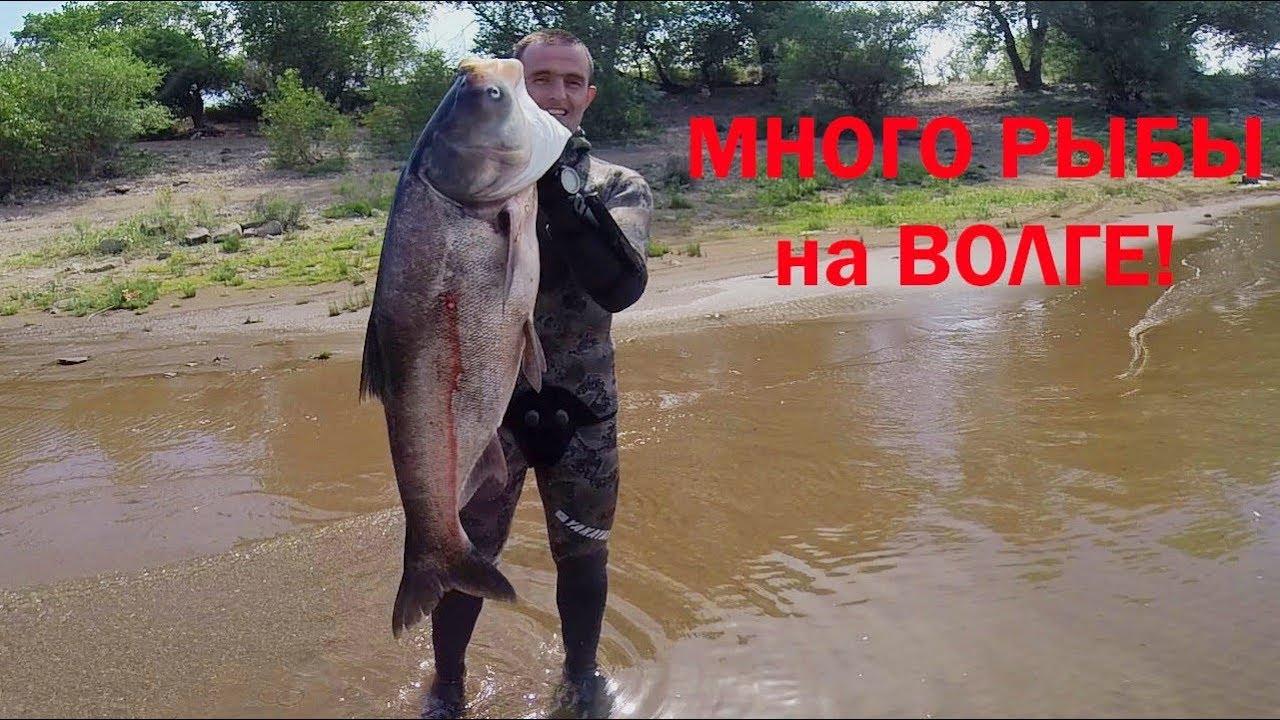 Подводная охота на толстолобика в Волгограде летом!