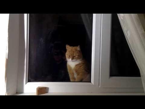 Кот с улицы просится домой))))