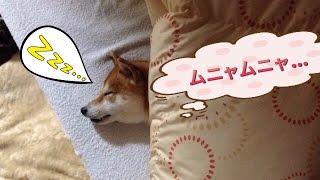 人のベッドで気持ちよさように寝ています・・・(笑)