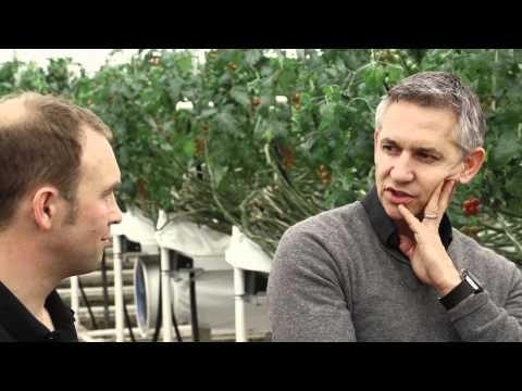 Gary and Barry go tomato picking in Evesham