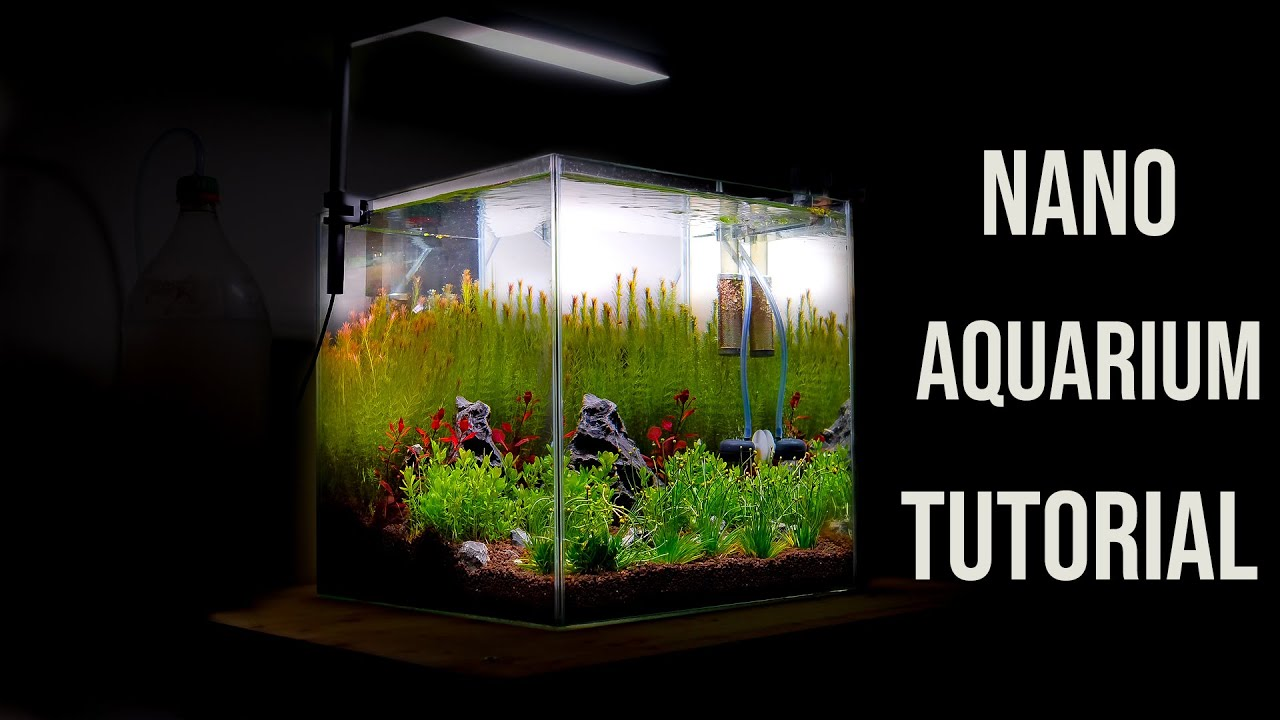 Nano AQUARIUM - AQUASCAPING Tutorial for Beginners - YouTube