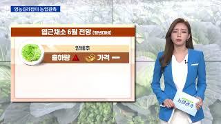 영농길라잡이 농업관측 (엽근채소, 양념채소 6월 관측)