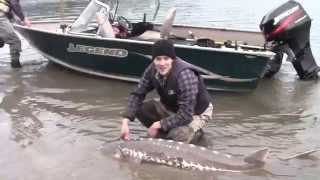 Sturgeon fishing the Harrison 2015
