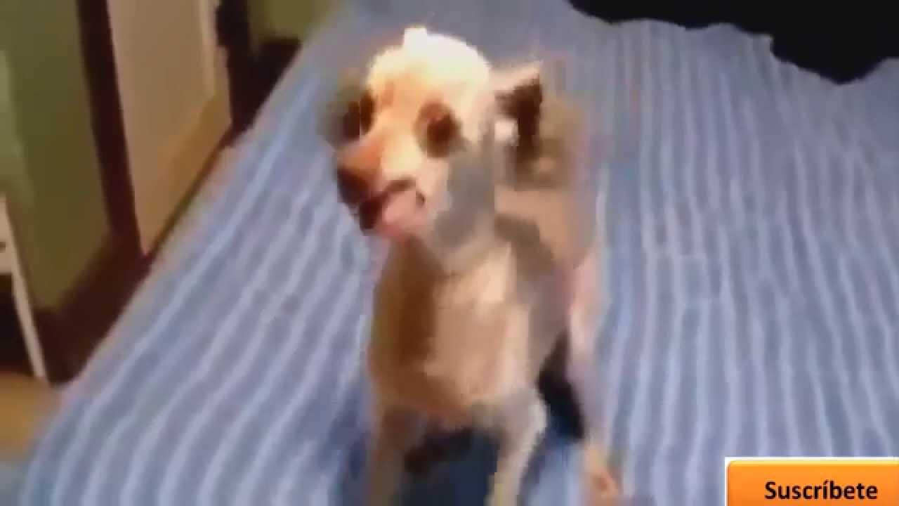 Animali divertenti hq bellissimi cani youtube