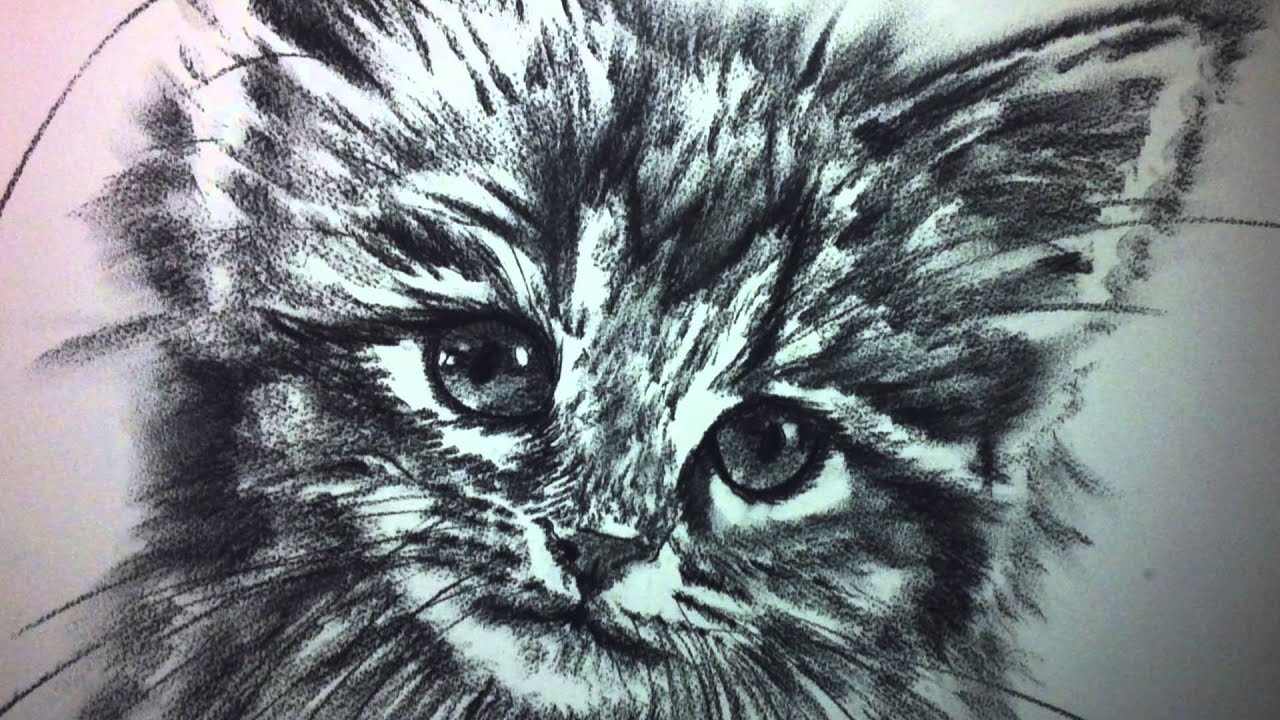 Dessin fusain animaux youtube - Animaux facile a dessiner ...