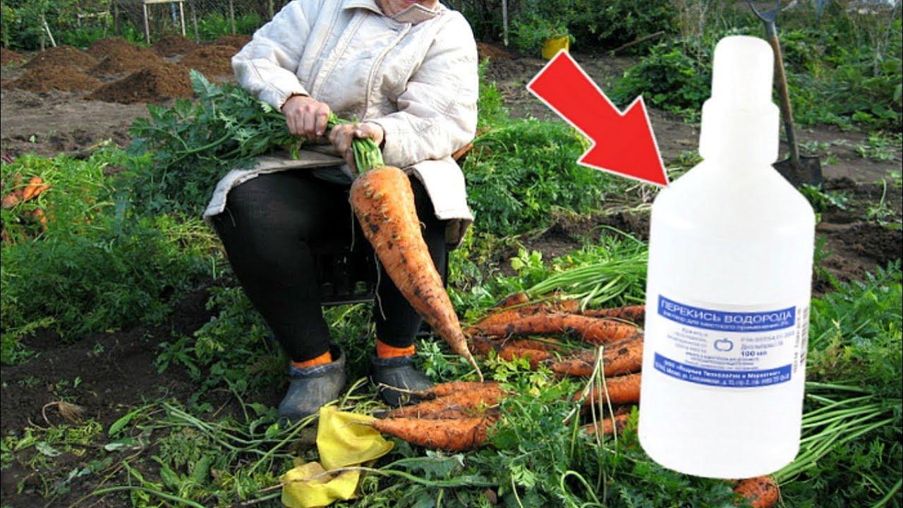За копейки в аптеке для каждого садовода! 7 полезных применений перекиси водорода в огороде и саду!