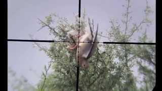 Pigeon Hunting Arg 1 Kalibrgun 5 5