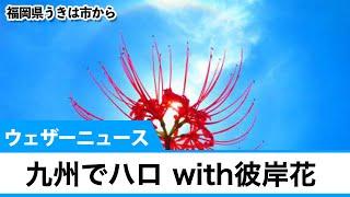 九州で「ハロ」with彼岸花