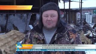Куда деть собак  Погорельцам в Новокузнецке нужна помощь