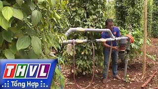 THVL   Người đưa tin 24G: Hiệu quả lớn từ công nghệ tưới nước tiết kiệm cho cà phê tại Tây Nguyên