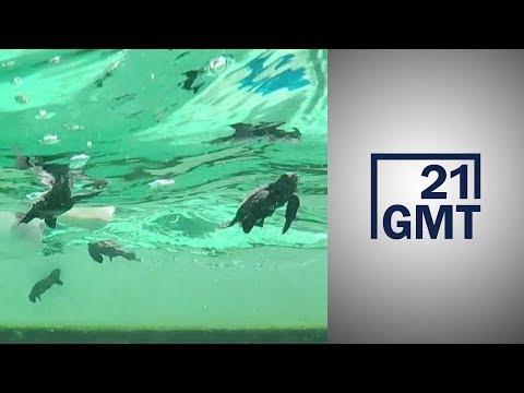تغير المناخ يهدد السلاحف البحرية في تونس.. ومشروع لإنقاذها عبر التكنولوجيا  - 01:58-2019 / 12 / 5