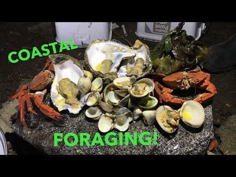 COASTAL FORAGING - Giant Oysters! Seaweed - Cockles , Cooked in a German Bunker !