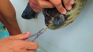 Sea Turtle Rescue. Say NO to plastic waste