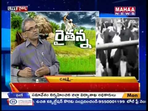 Raitanna On Dairy Industry || High-yield, low-cost ways -Mahaanews