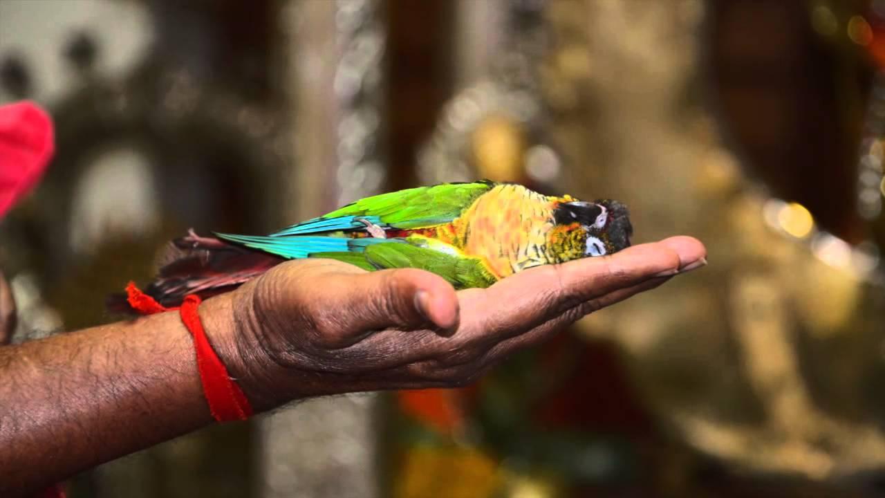 The Zodiac and Parrots | SGS Birds