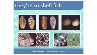 Mighty Morphogenesis, or how the fish got its spots | Thomas Woolley | TEDxNewcastle