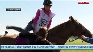 Соревнования по дистанционным конным пробегам состоялись в Тюменской области