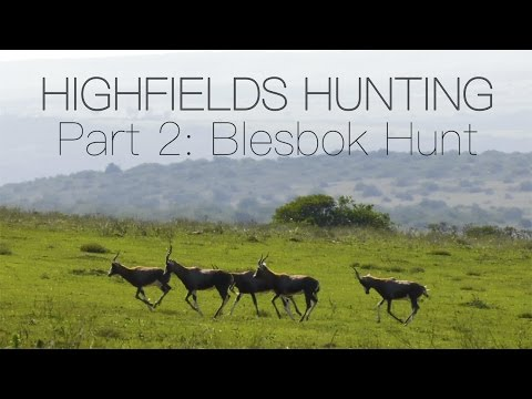 Highfields Hunting, Day 2: Blesbok Hunt With The .260's