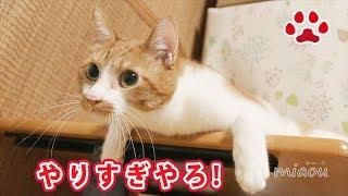僕ばっかり殴られてやってられない!【瀬戸のまや日記】I always beaten up, can't stand it!