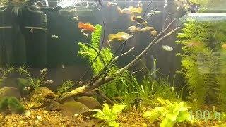 Мой аквариум - аквариумные рыбки - обзор моего аквариума.