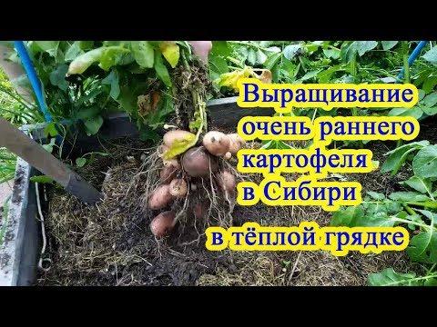 Вопрос: Какие сорта картофеля посадить, чтобы получить ранний урожай?