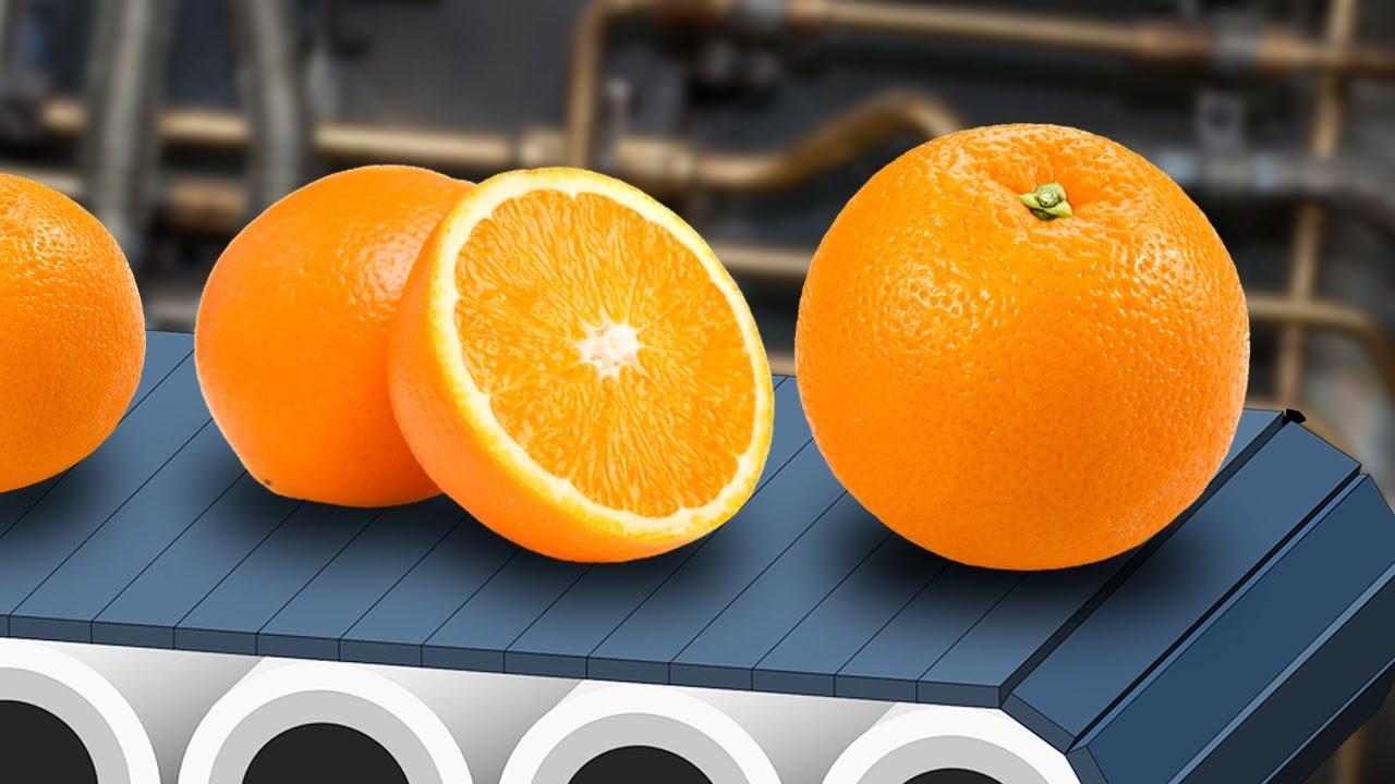 Factory citrus fruit