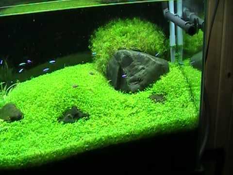 ADA Aquarium 90p YouTube