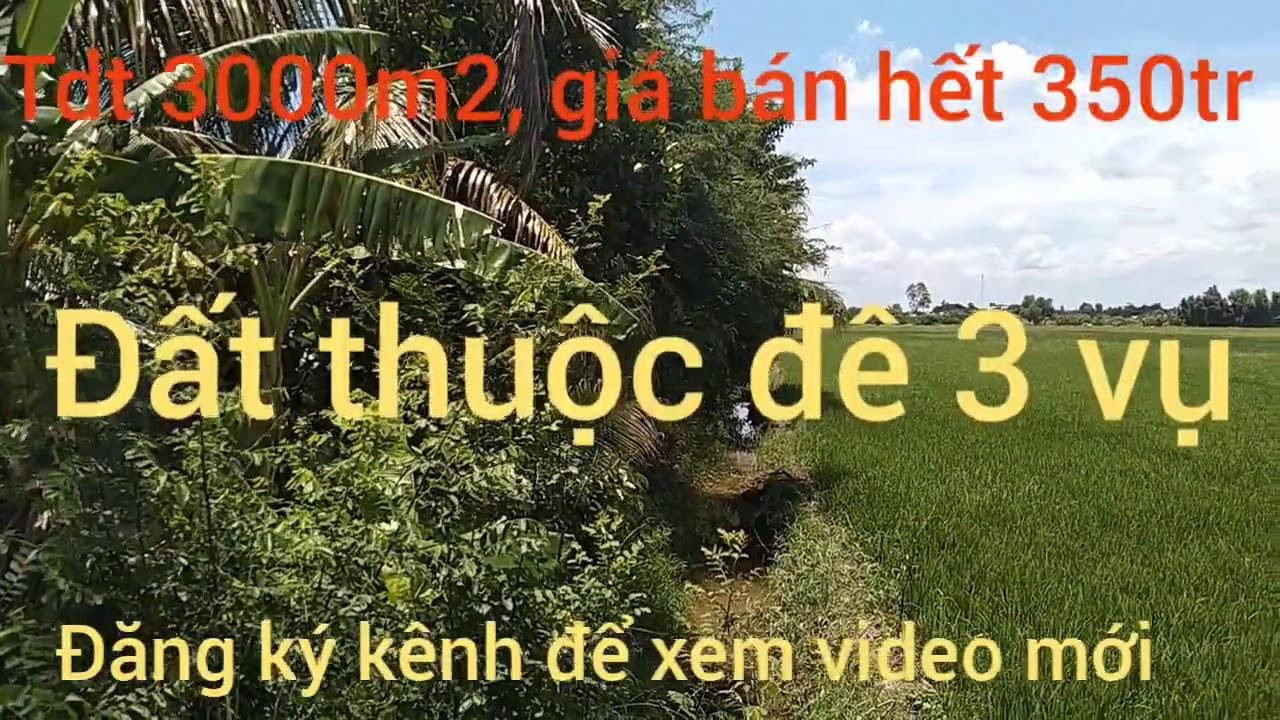 Bán đất thổ cư giá 350tr tdt 3000m2 xã Nhơn Hòa huyện Tân Thạnh long An(đã bán)