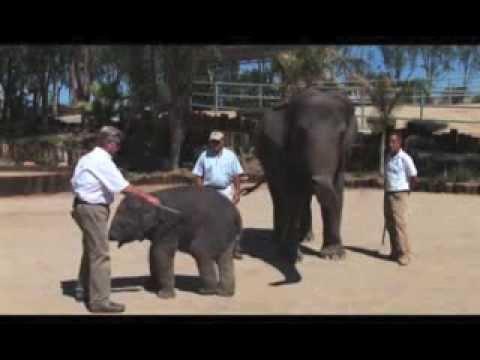 Guide and Tether Use - Americas Elephant Ambassadors