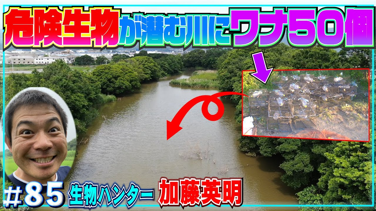 【ワナ50個】危険生物が潜む川にカニかご仕掛けた結果・・・≫生物ハンター加藤英明