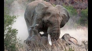 Top 10 Extreme Animal Fights