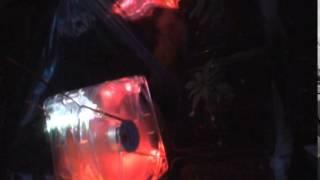 Medical Cannabis Grow in a Fish Tank (Seedling Chamber)