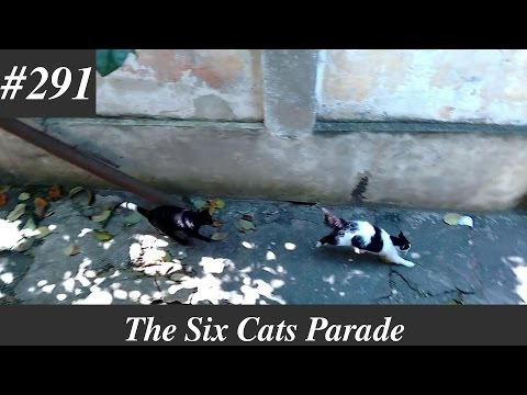 Rico vs Billy, cats fighting - part 3 [Natural sounds]
