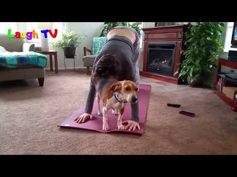 Funny Cute Dogs And Cats Interrupting Yoga Compilation    NEWHD