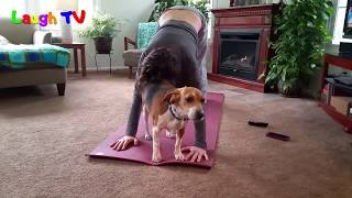 Funny Cute Dogs And Cats Interrupting Yoga Compilation || NEWHD