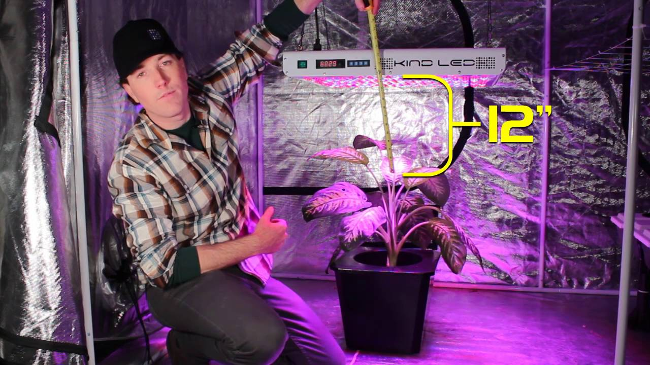 How Far Should Your Grow Light Be From Your Plants? Kind LED Grow Lights
