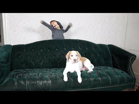 Zombie Baby Pranks Dog: Funny Dog Maymo