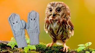 Видеоурок по вязанию перчаток
