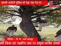 ADBHUT AAWAJ 21 02 2021 इनामी आरोपी पुलिस को देख चढ़ा पेड़ पर