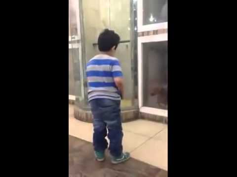 funny-dog-knocks-kid-down-with-fear