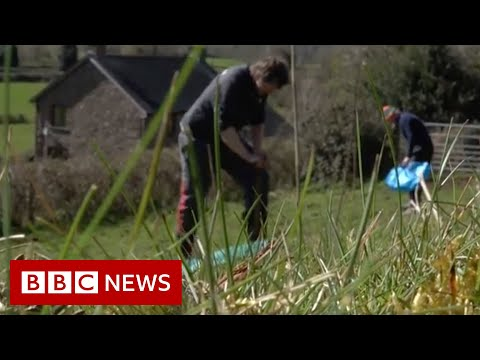 Trees planted by hospital treating Covid patients - BBC News