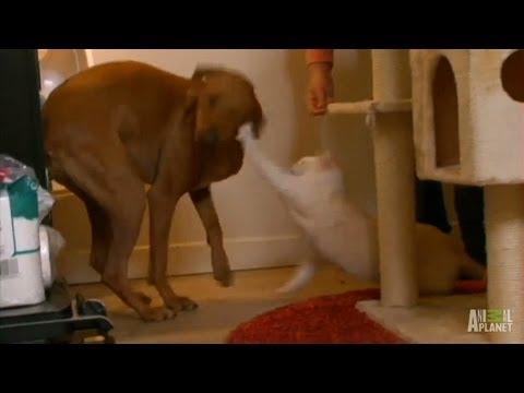 Feistiest Felines | My Cat From Hell
