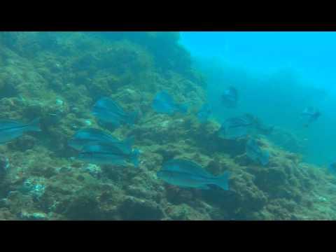 Amazing Algarve - Albufeira Underwater