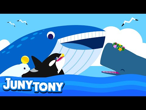 Whale Song For Kids | Learn Sea Animals | Blue Whale, Sperm Whale, Beluga Whale And Orca | Juny&Tony