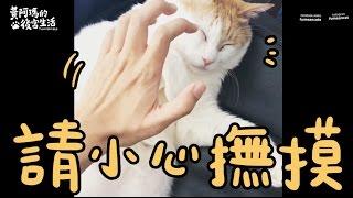 黃阿瑪的後宮生活-請小心撫摸(短秒數生活系列)