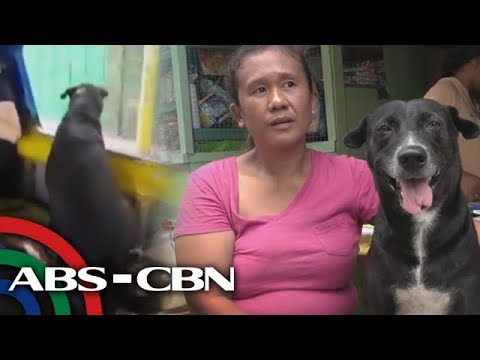 Rated K: The viral dog in a jeep
